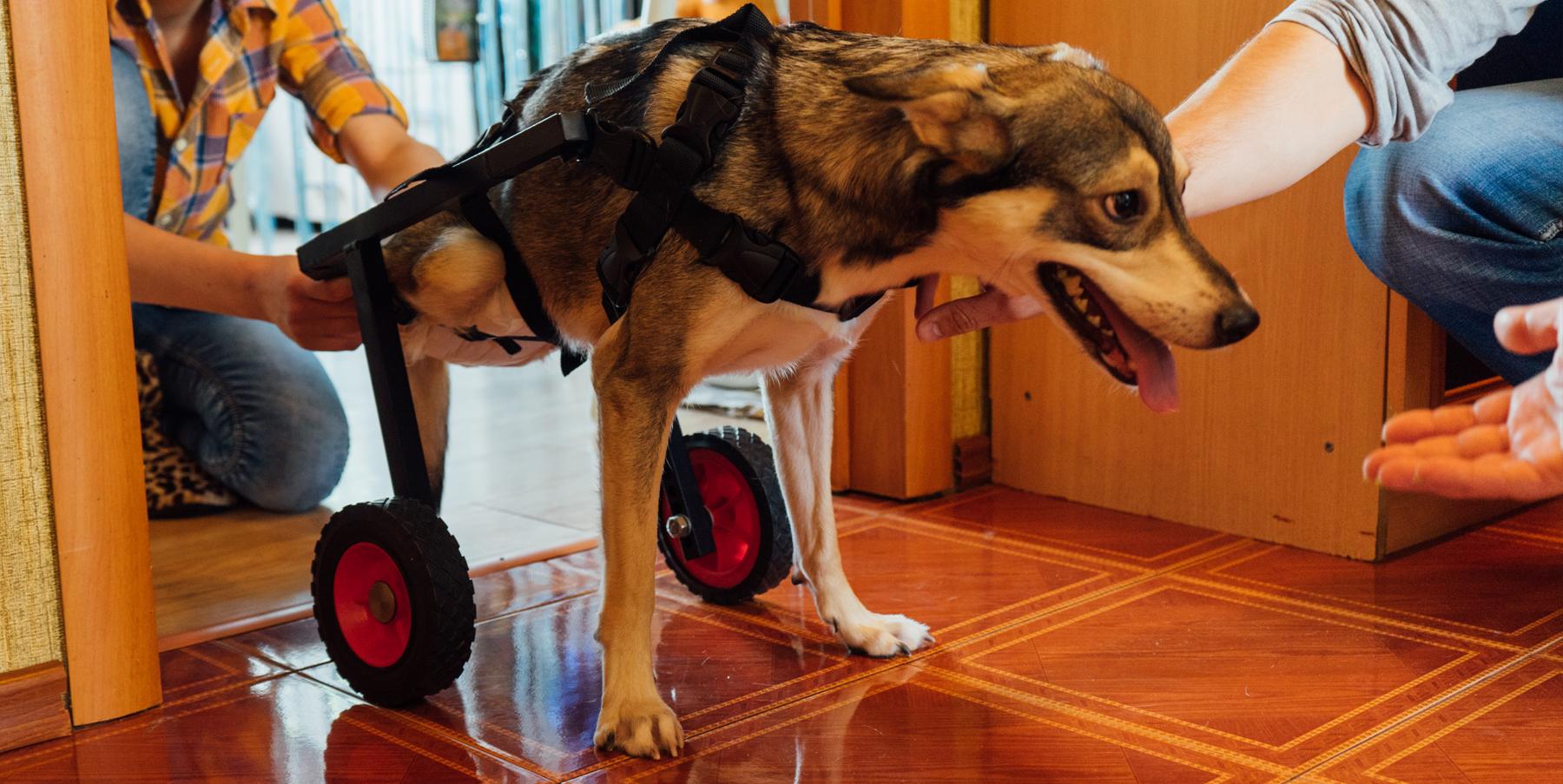 Коляска для собаки-инвалида своими руками
