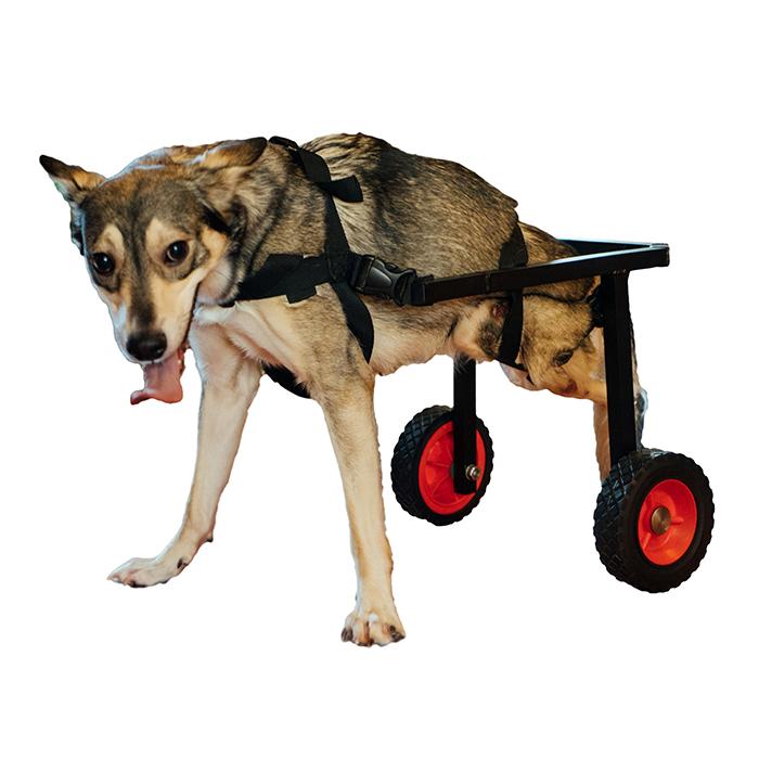 Инвалидная коляска для собаки (индивидуальные размеры)