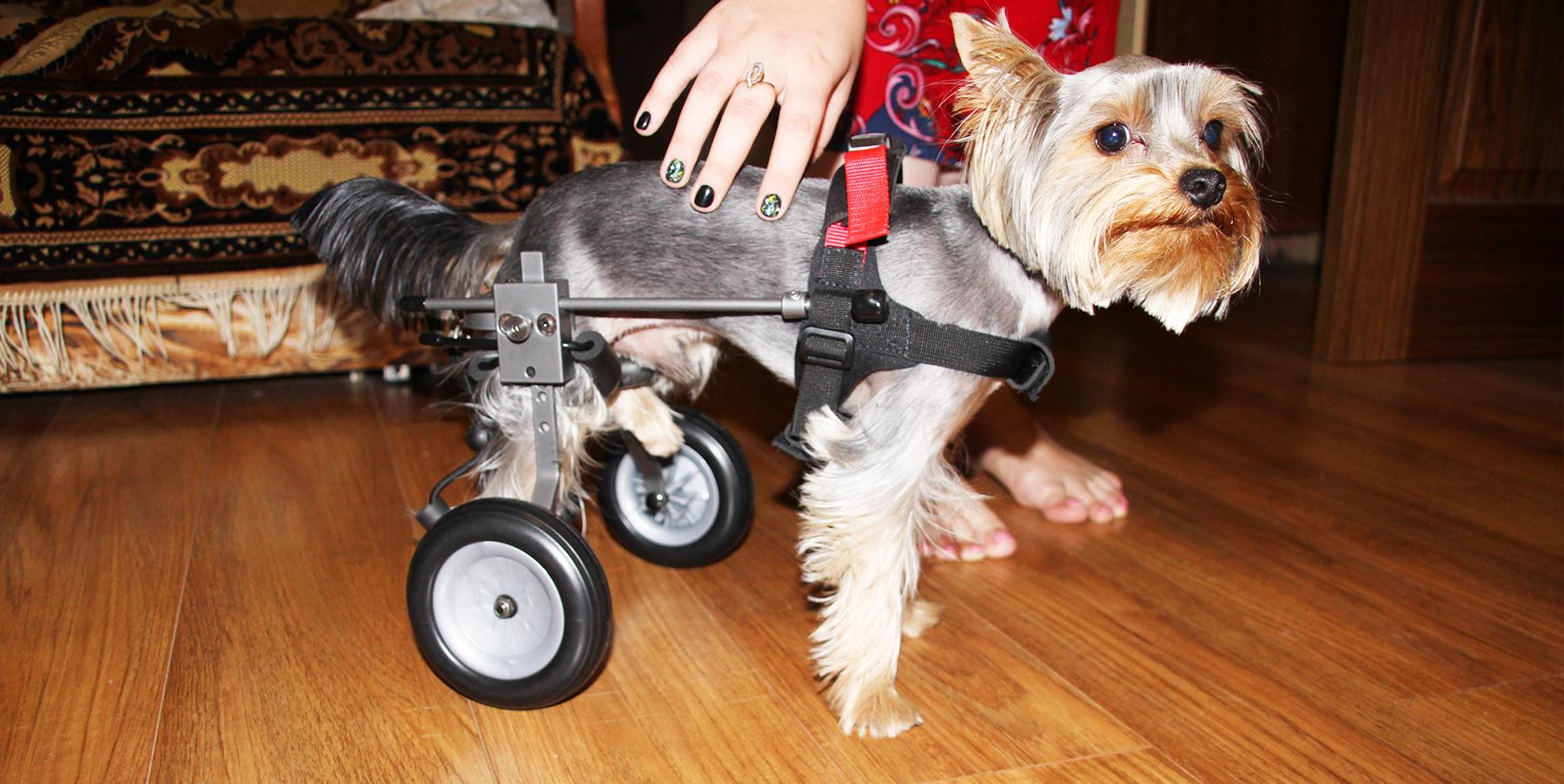 Инвалидн�е коля�ки для �обак